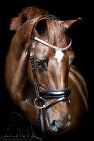 Chesnut Warmblood horse in sparkly snaffle bridle