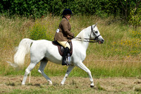 7. Showing (14.2hh and over)