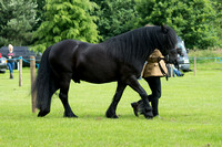 1. Best Condition Horse/Pony